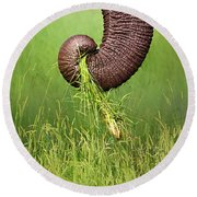 Elephant Trunk Pulling Grass Round Beach Towel