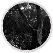 Round Beach Towel featuring the photograph Elizabethan Gardens Tree In B And W by Greg Reed