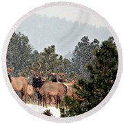 Round Beach Towel featuring the photograph Elk In The Snowing Open by Barbara Chichester