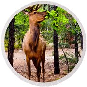 Round Beach Towel featuring the photograph Elk - Mather Grand Canyon by Bob and Nadine Johnston