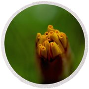 Emerging Bud - Yellow Flower Round Beach Towel