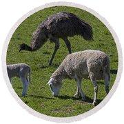 Emu And Sheep Round Beach Towel