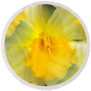 Round Beach Towel featuring the photograph Endless Yellow Daffodil by Judy Palkimas