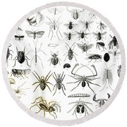 Entomology Myriapoda And Arachnida  Round Beach Towel