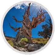 Eternity - Dramatic View Of The Ancient Bristlecone Pine Tree With Sun Burst. Round Beach Towel