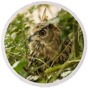 Eurasian Eagle-owl 2 Round Beach Towel
