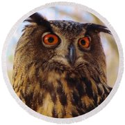Round Beach Towel featuring the photograph Eurasian Eagle Owl by Cynthia Guinn