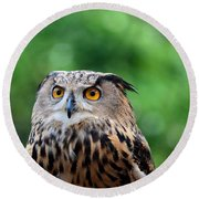 Eurasian Or European Eagle Owl Bubo Bubo Stares Intently Round Beach Towel