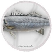 European Seabass Dicentrarchus Labrax - Bar Commun - Loup De Mer - Lubina - Havabor - Seafood Art Round Beach Towel