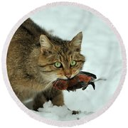European Wildcat Round Beach Towel