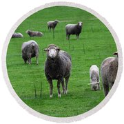Round Beach Towel featuring the photograph Ewes And Lambs by Jennifer Muller