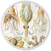 Examples Of Various Cephalopods Round Beach Towel