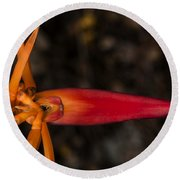 Exotic Heliconia Round Beach Towel by Steven Sparks