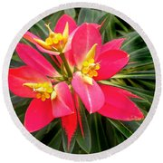 Exotic Red Flower Round Beach Towel