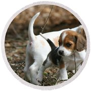 Exploring Beagle Pups Round Beach Towel
