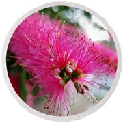 Round Beach Towel featuring the photograph Exquisite Pink Bottle Brush by Leanne Seymour