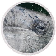 Eye Of A Young Gray Whale Round Beach Towel by Don Schwartz