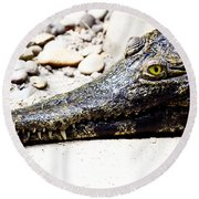 Eye Of The Croc Round Beach Towel