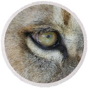 Round Beach Towel featuring the photograph Eye Of The Lion by Judy Whitton