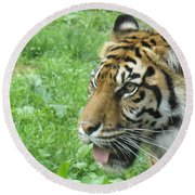 Round Beach Towel featuring the photograph Eye Of The Tiger by Lingfai Leung