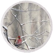 Eyeing The Feeder Alaskan Redpoll In Winter Round Beach Towel
