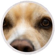 Round Beach Towel featuring the photograph Eyes Of Friendship  by Aaron Berg
