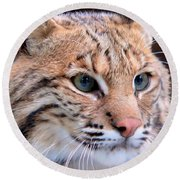 Eyes Of A Lynx Round Beach Towel by Rosalie Scanlon