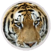 Round Beach Towel featuring the photograph Eyes Of The Tiger by John Haldane