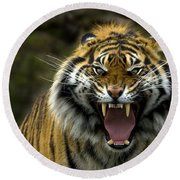 Eyes Of The Tiger Round Beach Towel by Mike  Dawson