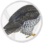 Falcon Round Beach Towel by Anonymous