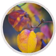 Fall Color Round Beach Towel by Stephen Anderson