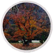 Fall Foliage At Lost Maples State Park  Round Beach Towel