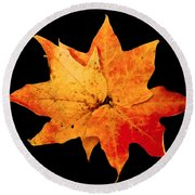 Round Beach Towel featuring the photograph Fall Leaf Trio by Dee Dee  Whittle