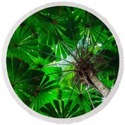 Fan Palm Tree Of The Rainforest Round Beach Towel