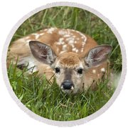 Fawn Round Beach Towel by Jeannette Hunt