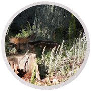 Fawn Front Yard Divide Co Round Beach Towel