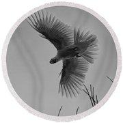 Feathered Flight  Round Beach Towel by Douglas Barnard