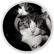 Round Beach Towel featuring the photograph Feline Love  by Laura Melis