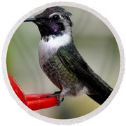 Round Beach Towel featuring the photograph Male Anna On Feeder Perch Posing by Jay Milo