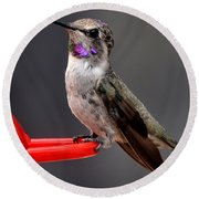 Round Beach Towel featuring the photograph Female Anna's Hummingbird On Perch Posing For Her Supper by Jay Milo