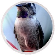 Round Beach Towel featuring the photograph Female Anna With Purple Blue Throat by Jay Milo