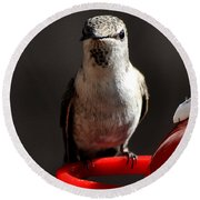 Round Beach Towel featuring the photograph Female Anna Hummingbird by Jay Milo
