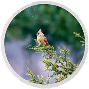 Female Cardinal In Snow Round Beach Towel by Eleanor Abramson