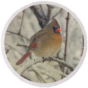 Female Cardinal In The Snow II Round Beach Towel by Sandy Keeton