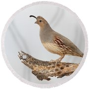 Female Gambel's Quail Round Beach Towel