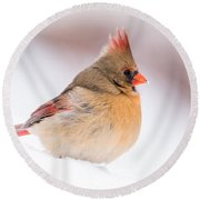 Female Northern Cardinal Round Beach Towel