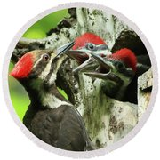 Female Pileated Woodpecker At Nest Round Beach Towel by Mircea Costina Photography