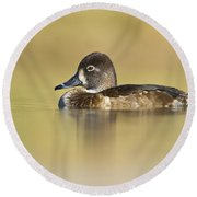 Round Beach Towel featuring the photograph Female Ring Necked Duck by Bryan Keil