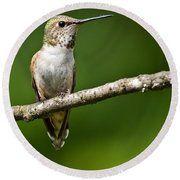 Female Rufous Hummingbird In A Tree Round Beach Towel by Jeff Goulden