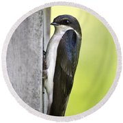 Tree Swallow On Nestbox Round Beach Towel by Christina Rollo